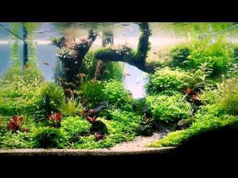 Aquascaping es una de mis cosas favoritas en la vida ! Y pensar que apenas lo descubrí hace un mes... jardines de musgo, cuántas sorpresas tiene la vida :)