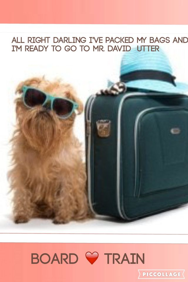 All Right Darling I Ve Packed My Bags And I M Ready To Go To Mr