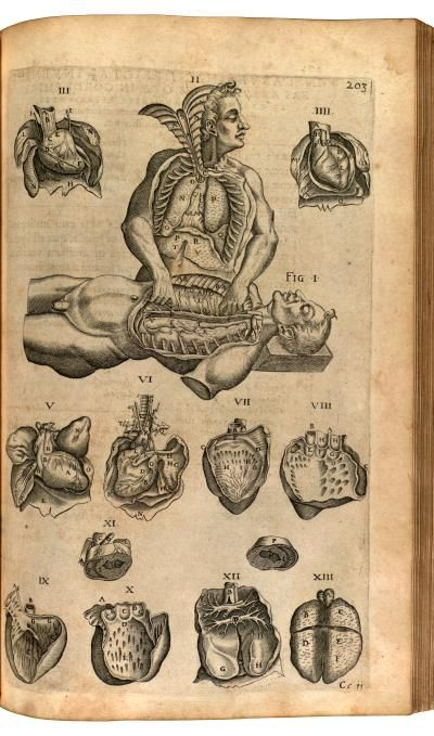 One cadaver dissecting another Descriptive Title: Thorax - heart and lung. Technique: engraving/etching Source: Opera omnia anatomica et medica / 1627