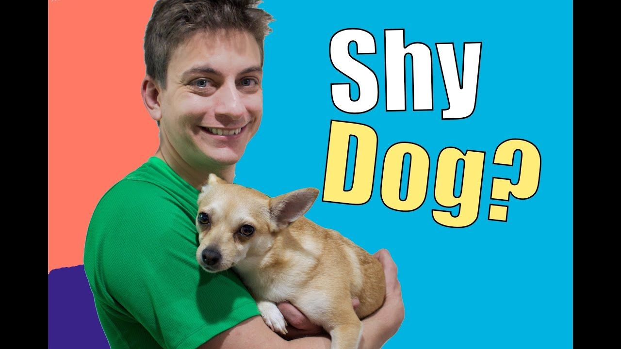 How To Teach A Shy Fearful Or Nervous Dog Dog Training Dog