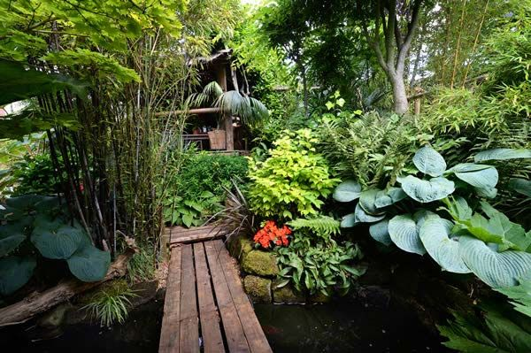 Hardy Exotic Plants To Grow In The Uk Nick Wilson S Garden St
