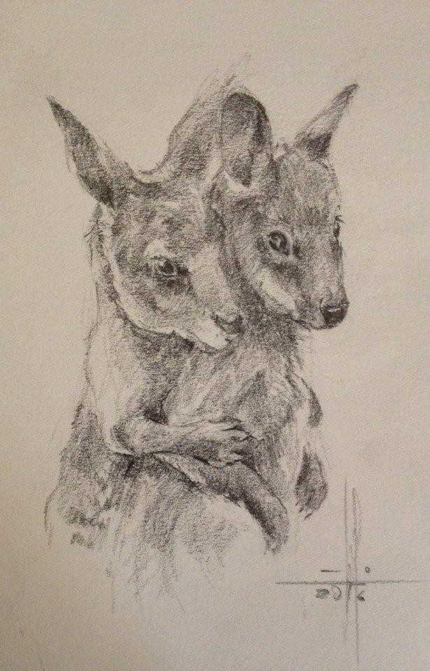 Dibujo canguros jóvenes a lápiz grafito   sammy en 2018   Pinterest ...