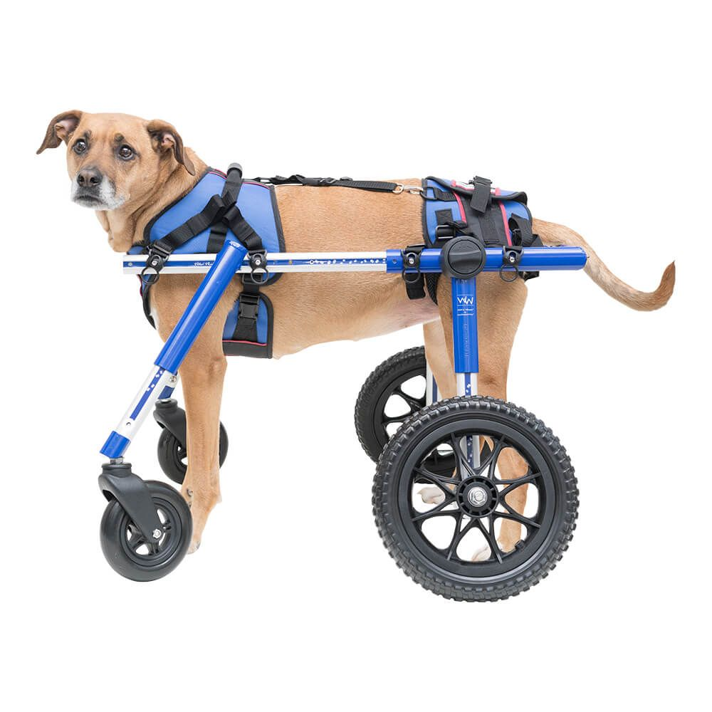 How Much Is A Wheelchair >> How Much Does A Dog Wheelchair Cost Dog Dog Accessories