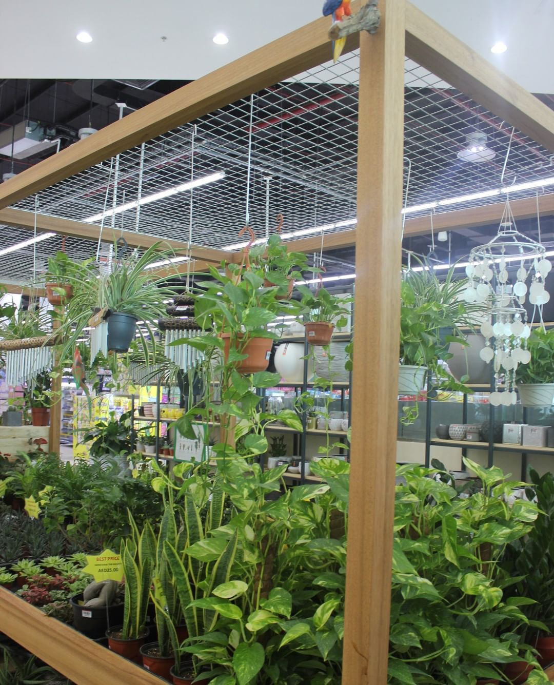 Make way for Indoor Plants in your Homes! Shop Indoor