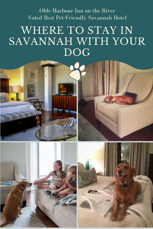 dog friendly hotels in savannah ga