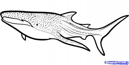 Step 6 How To Draw A Whale Shark Whale Shark Shark Coloring Pages Whale Shark Whale Coloring Pages
