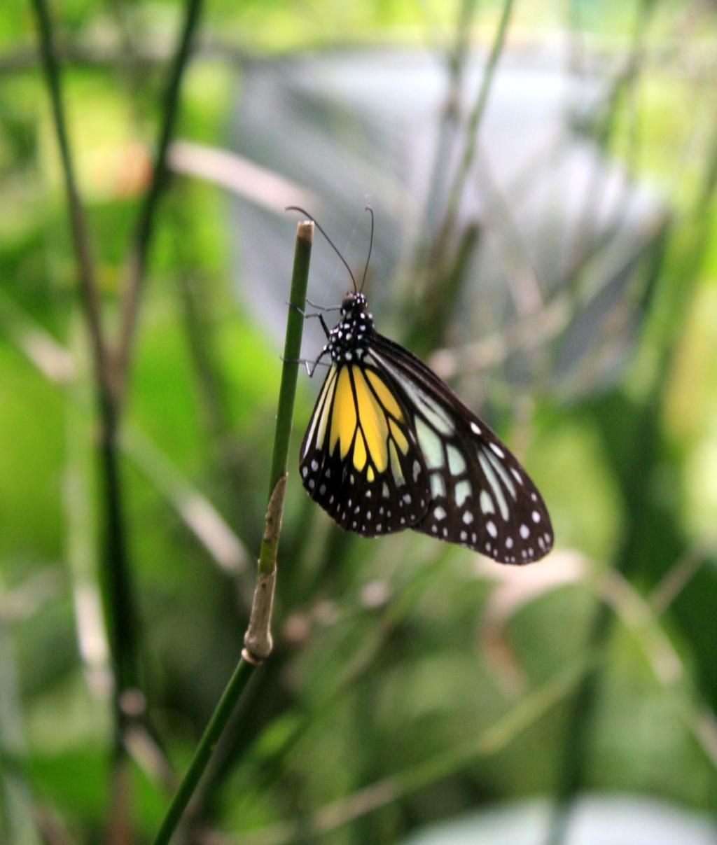 Kuala Lumpur Butterfly Park Butterfly park, Trip advisor