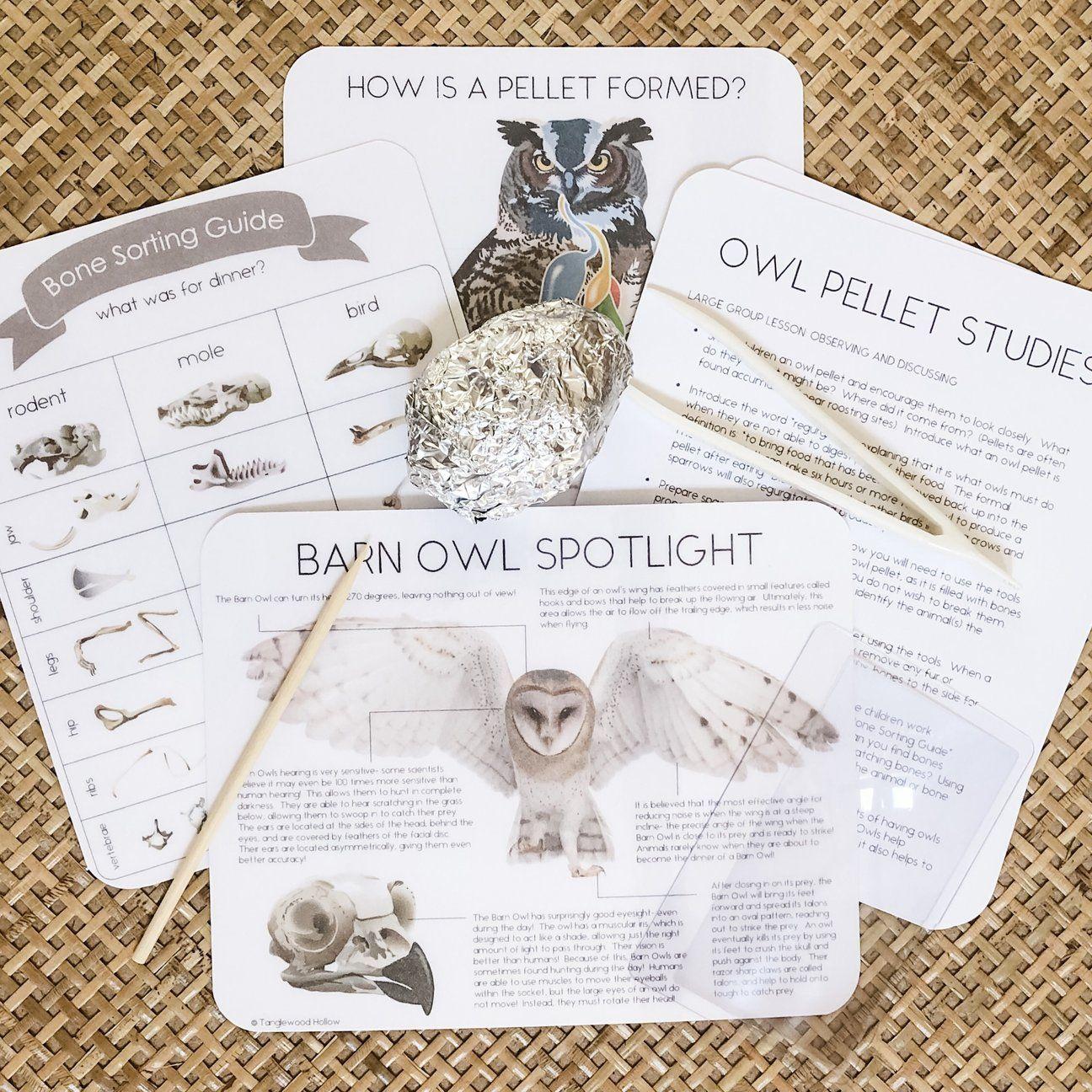 Individual Owl Pellet Kit In