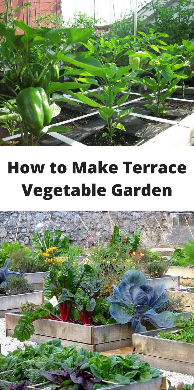 How To Make Terrace Vegetable Garden Complete Tutorial 640 x 480