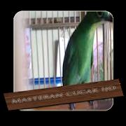 Baru 30 Gambar Kartun Cucak Ijo Suara Cucak Ijo Betina 1 1 Apk Download Android Download Suara Burung Cucak Ijo Gacor Isian Mp Gambar Kartun Gambar Kartun