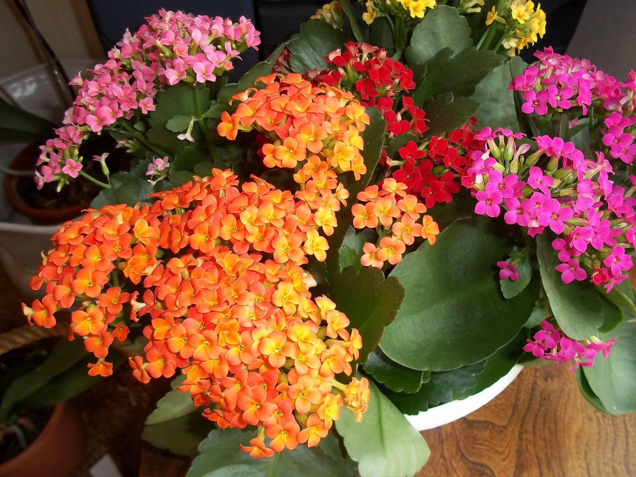 Plantes Grasses Fleuries Interieur Photo De Fleur Une Pensee