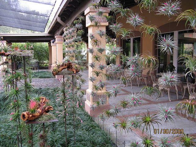 Singapore Inspiration Air Plants A GogoDaily Interior