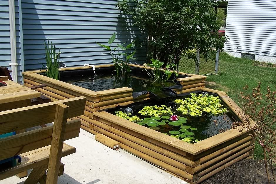 1300 gal above ground pond pictures monsterfishkeepers for Above ground fish pond designs