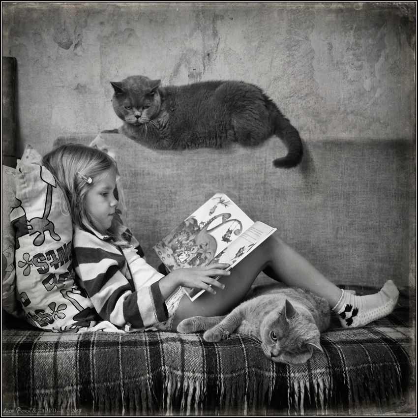 photo: Cat's Tales | photographer: Andy Prokh | WWW.PHOTODOM.COM