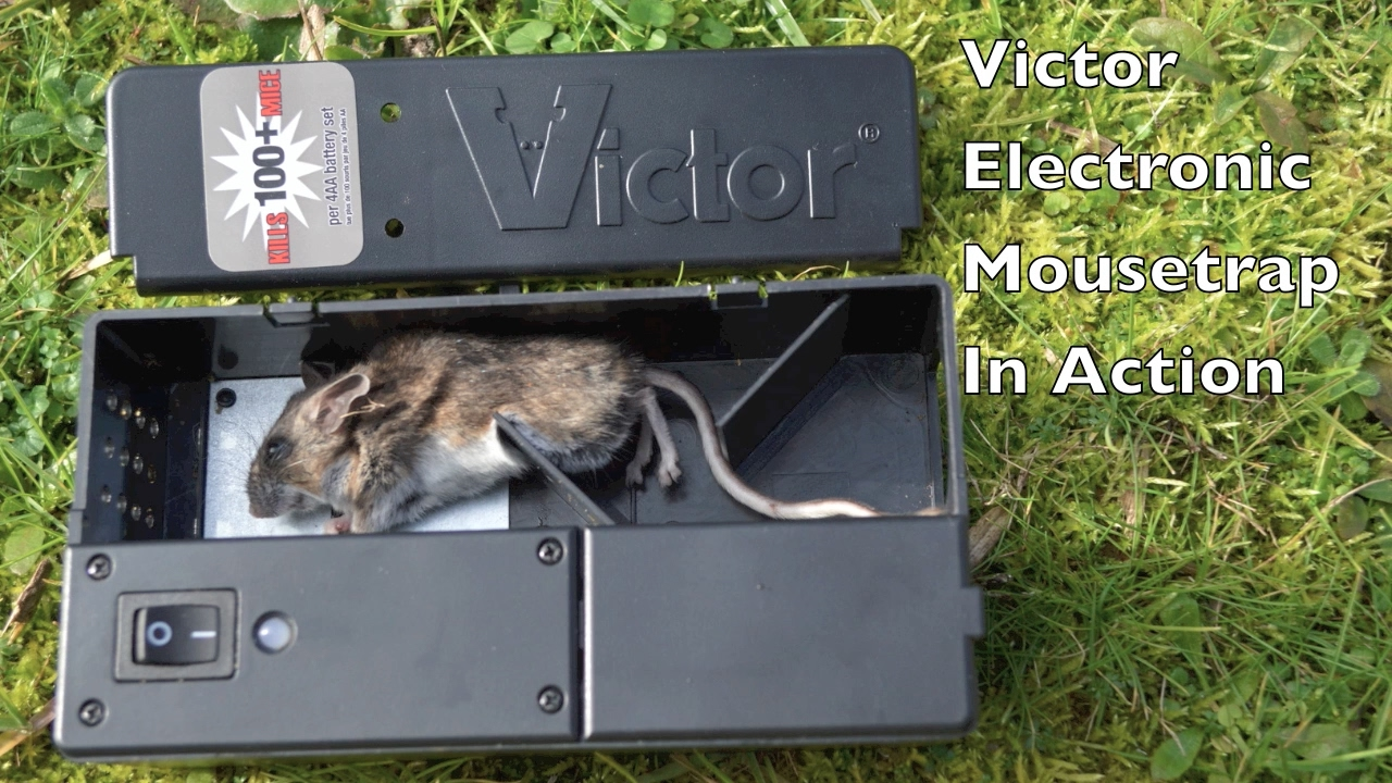 Victor Electronic Mouse Trap in Action with Motion Cameras - Full Review. Mouse Trap Mondays #mousetrap Random YouTube Video on vTomb - Victor Electronic Mouse Trap in Action with Motion Cameras - Full Review. Mouse Trap Mondays #mousetrap