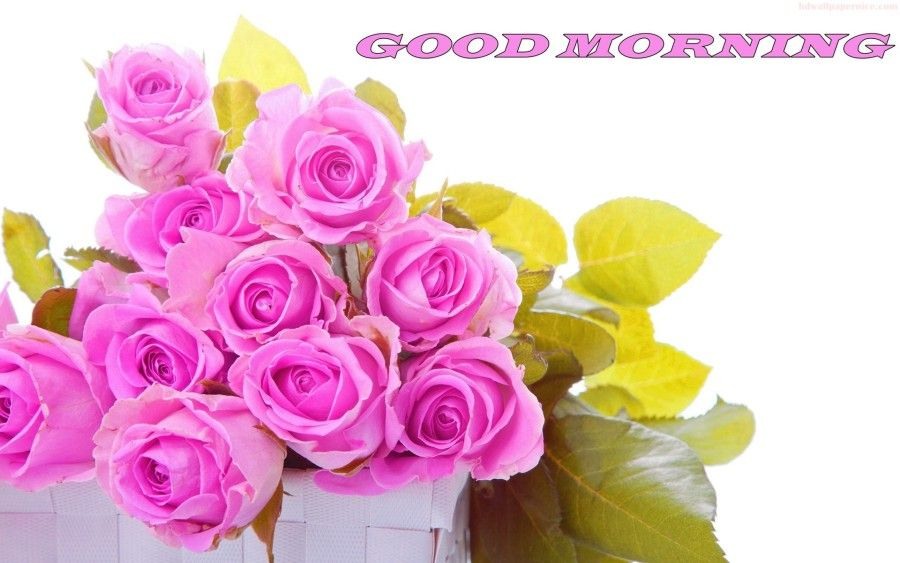 Good Morning With Beautiful Pink Roses Hd Wallpaper 05289