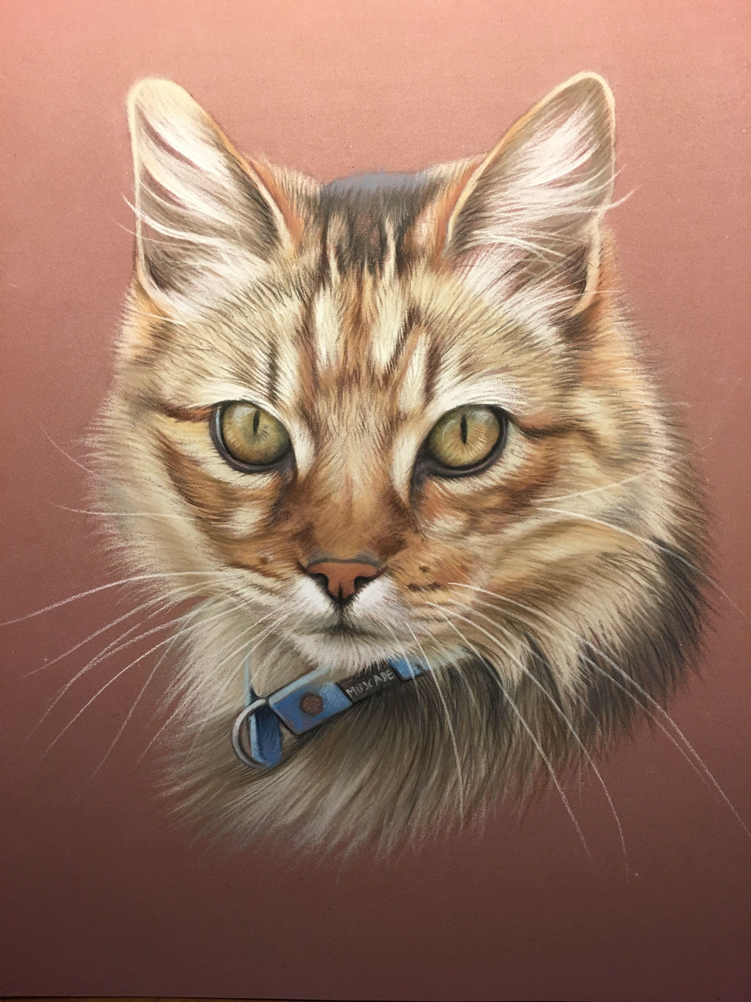 отлично подходят портрет кошки картинки для
