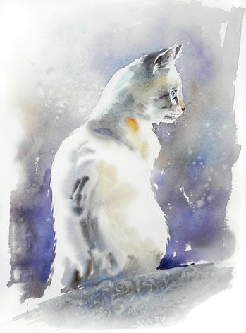Chat Blanc Celine Dodeman Dessin Chat Aquarelle Chat Peinture Chat
