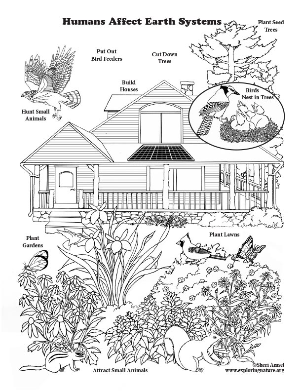 Coloring Pages | National Geographic Society | 792x612