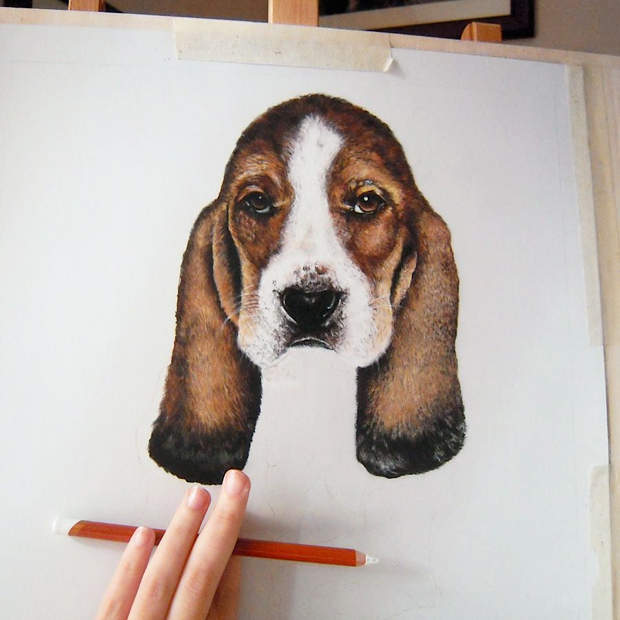 Drawing on commission. #bassethound #hypperrealism