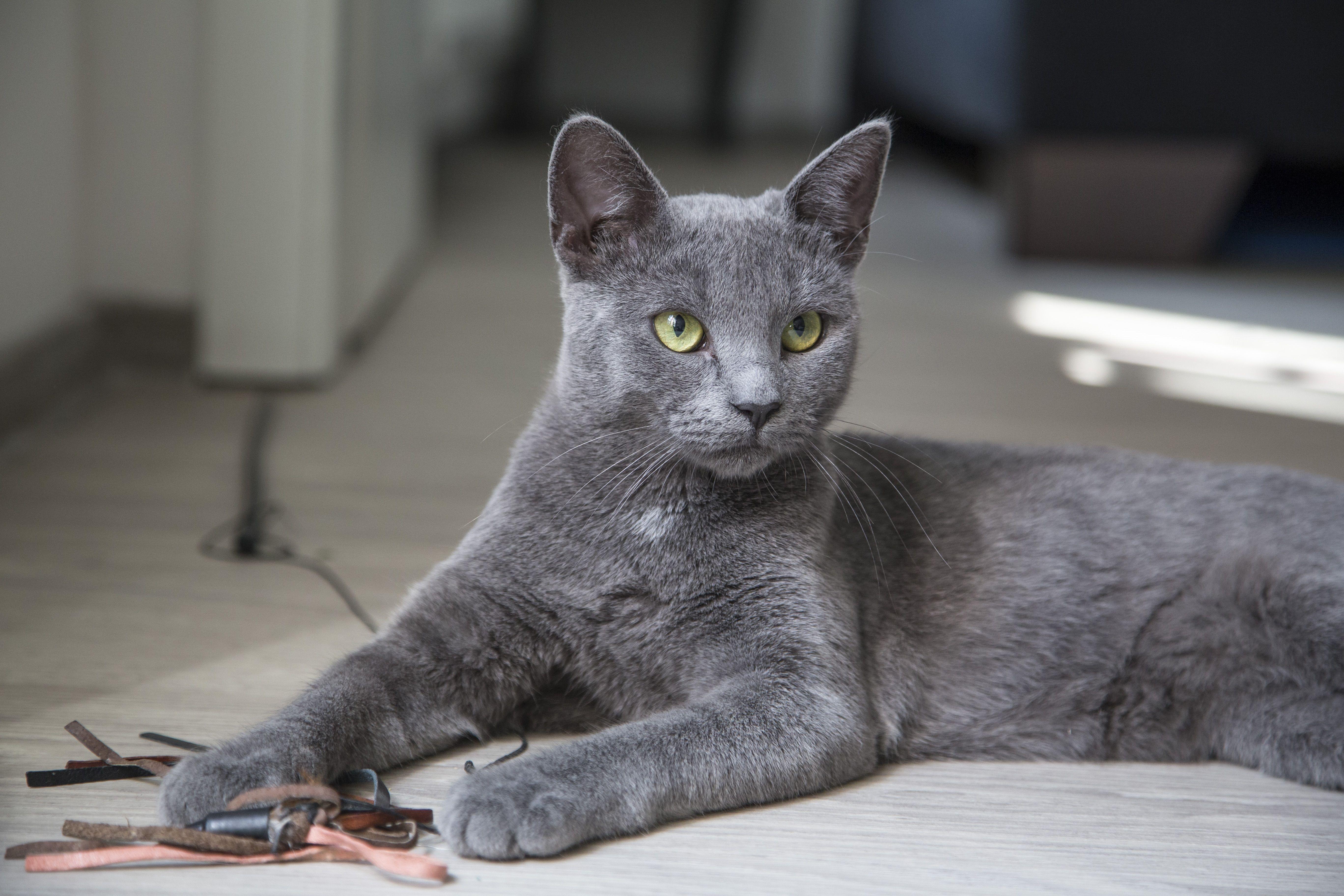 Grey Cat With Green Eyes Grey Cat Names Grey Kitten Names Grey