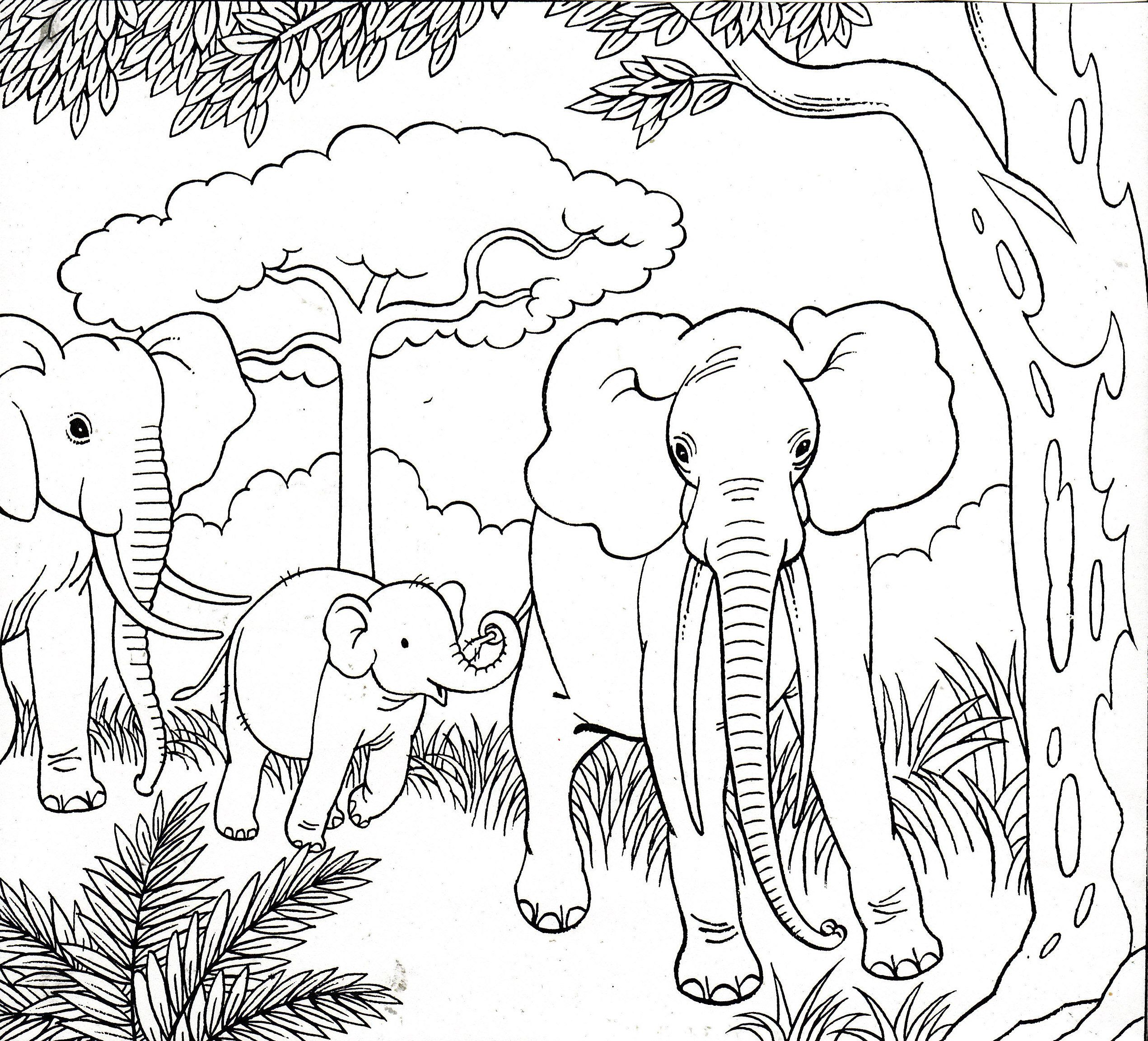 olifanten elephants kleurplaten dieren kleurplaten en