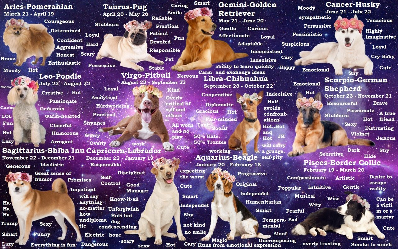 Dog Breeds Zodiac Astrology Zodiac Signs Animals Dog Signs Cat Signs