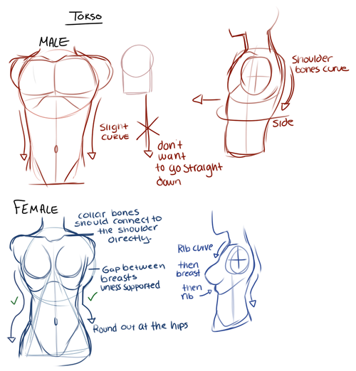 Female Character Design Tutorial : Drawing tips male figure drawings and character design