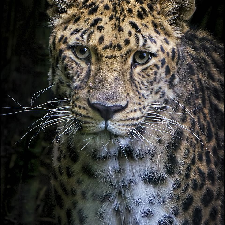 It's Monday and time for a beautiful leopard picture www