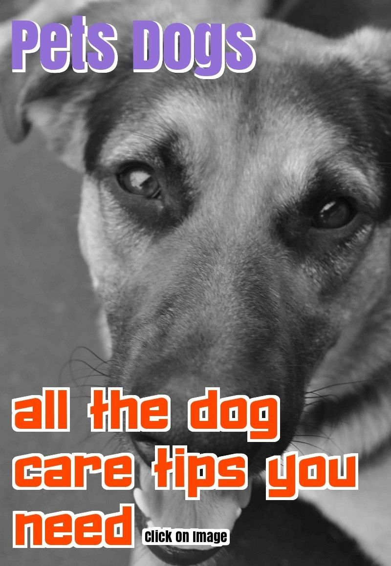 Treat Your Pet Right With These Dog Care Tips Dog Care Dog Care