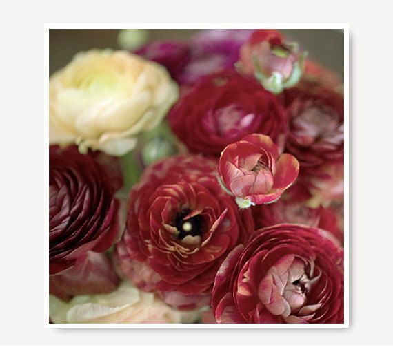 Red Flower Photo ranunculus red and yellow by semisweetstudios, $18.00