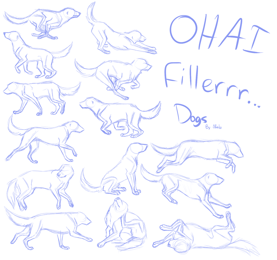Dog Anatomy Study Thing By Divinenymph Animals And Nature
