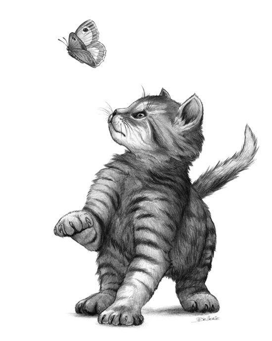 Chaton Papillon Dessin Chat Dessins Mignons Et Dessin