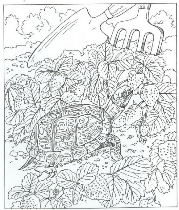 40 coloring pages of nature around the house on kids n op kids n fun vind je altijd. Black Bedroom Furniture Sets. Home Design Ideas