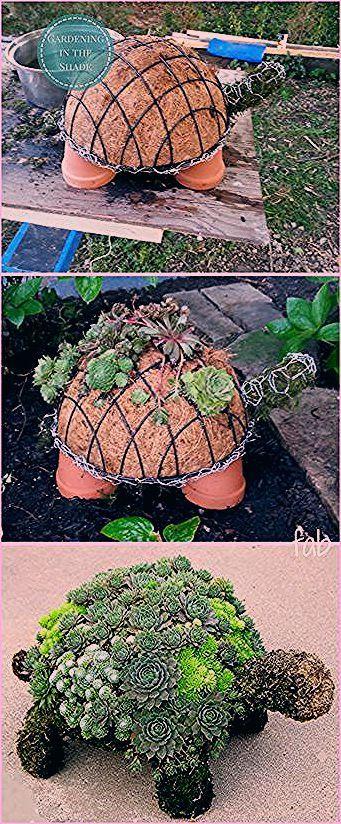 Photo of DIY Succulent Turtle Tutorial-Video – Garten Design