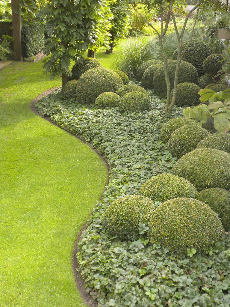 Could Build In Globe Ilex Into Front Foundation Bed To Give Dimension To Cloud Design Backyard Landscaping Designs Landscape Design Modern Garden