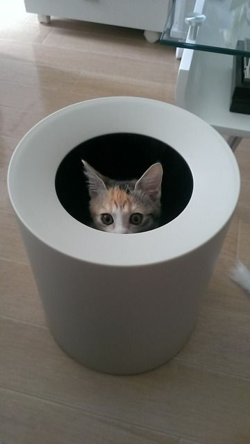 猫のしつけ方教えて Cat Pics I Love Cats Animals And Pets