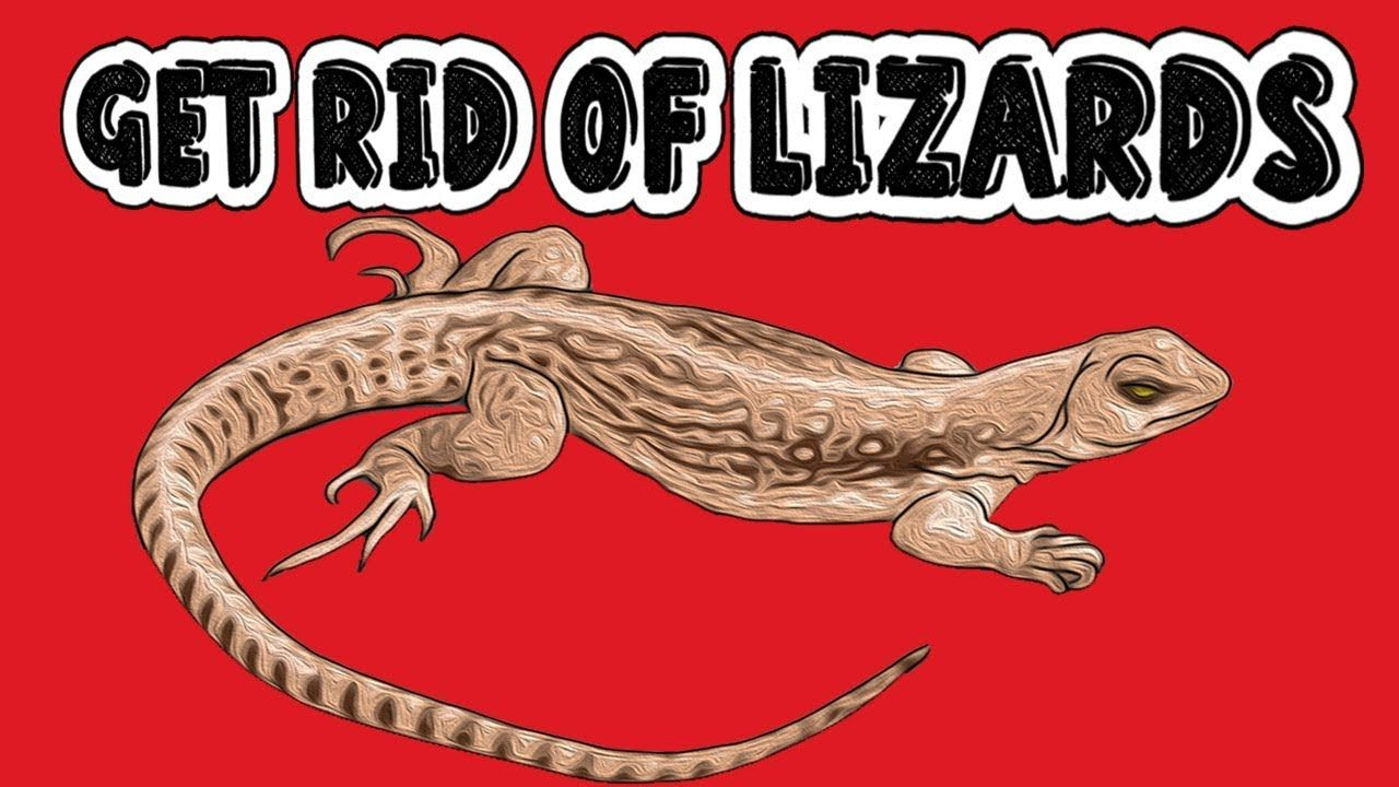 How to get rid of lizards permanently and quickly at home
