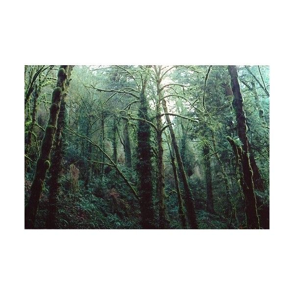 outdoor woods backgrounds. Perfect Backgrounds Hey Soul Sister  Liked On Polyvore Featuring Pictures Backgrounds  Photos Green To Outdoor Woods Backgrounds