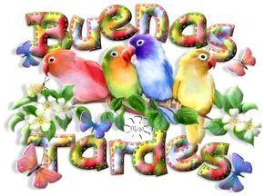 Hermosos periquitos de colores junto al mensaje: Buenas Tardes