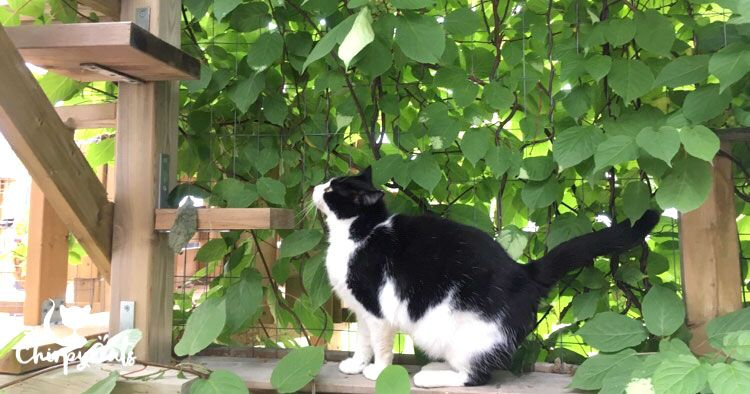 How To Build A Catio Your Cat Will Love Outdoor Cat Tunnel Catio Cat Playground Outdoor
