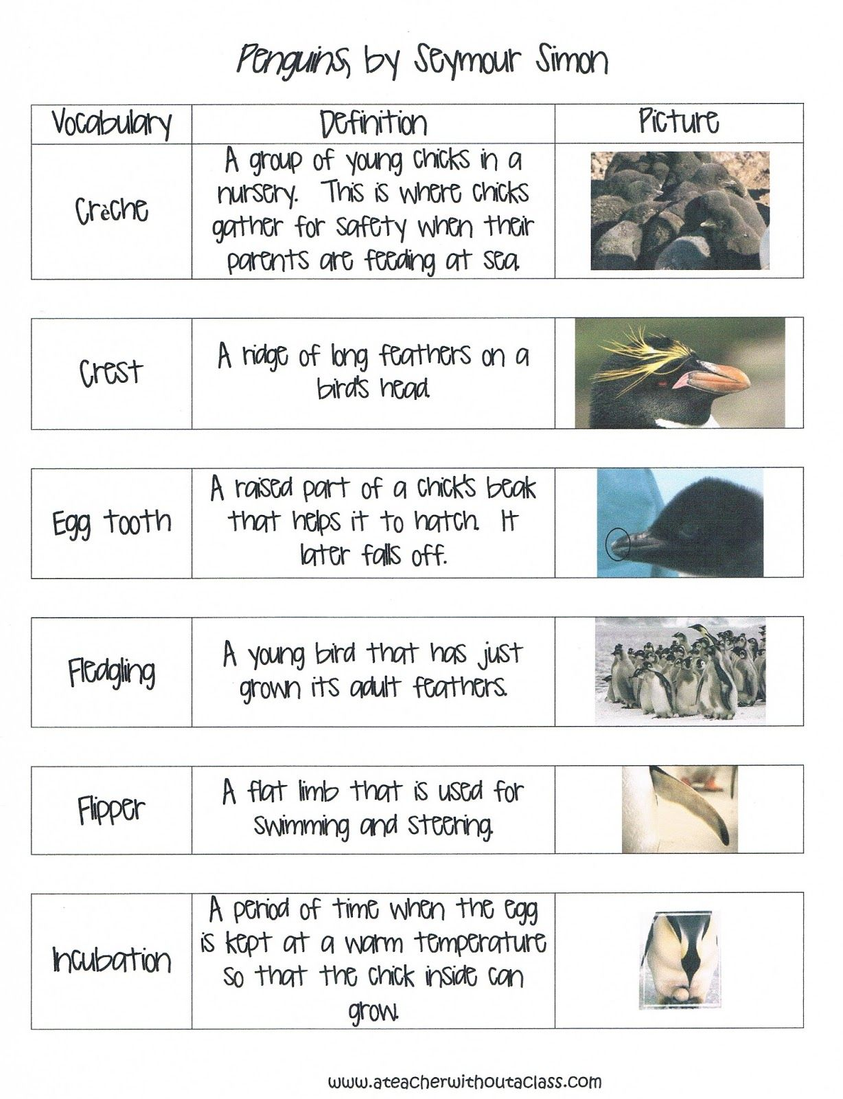 Penguin Vocabulary