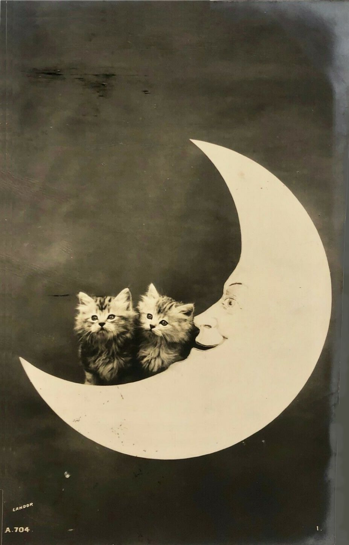 Kittens On The Moon In 2020 Kittens Moon Moon River