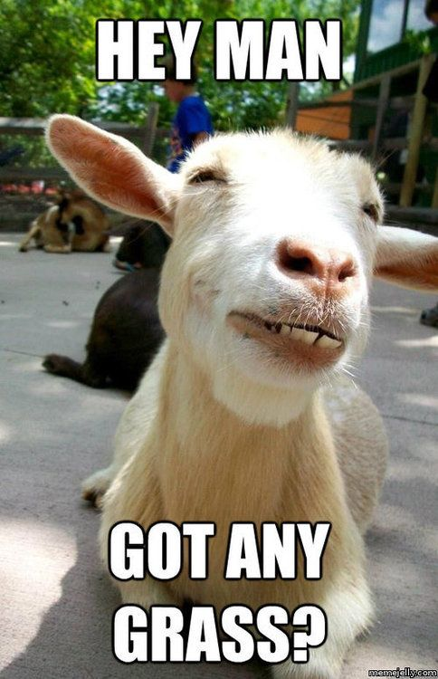 14 Goat Quotes For Every Occasion Goats Funny Funny Goat Pictures Funny Goat Memes