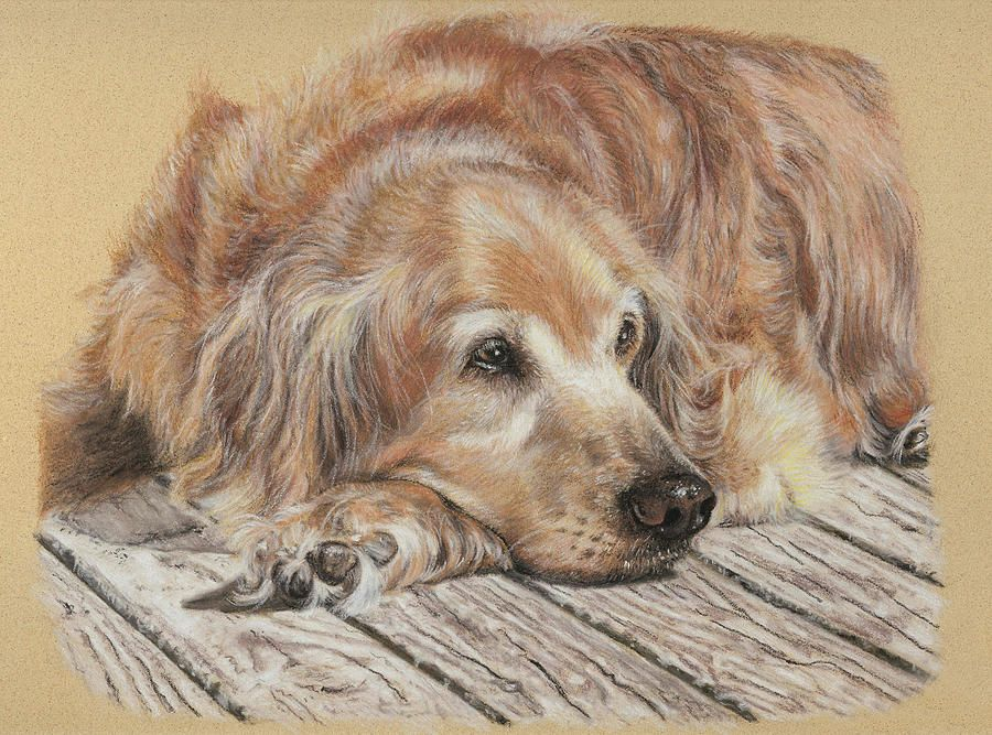 Lexie By Terry Kirkland Cook In 2020 Dog Paintings Golden Retriever Art Dog Art