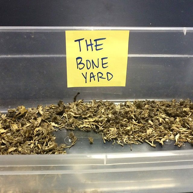 Whenever my classes dissect owl pellets some groups get multiple skulls and some groups don't get any. This year I made a boneyard were groups could throw in their extra bones. It worked beautifully! #owlpellets #bones #sciencerocks #scienceteacher