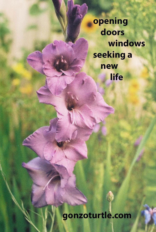 "Ron Vaught on Twitter: ""#gonzoturtle #poem #poetry #ReadThinkEvolve #life https://t.co/SKjre19rk1"""