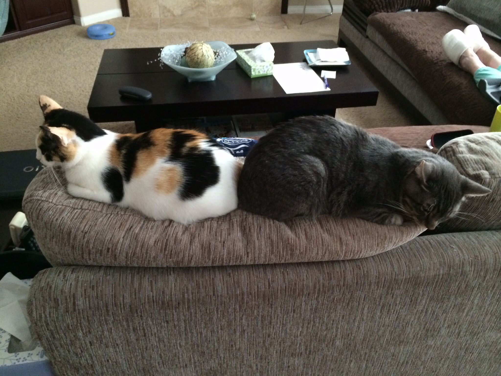 Ramses and Tari sleeping days before she gave birth.