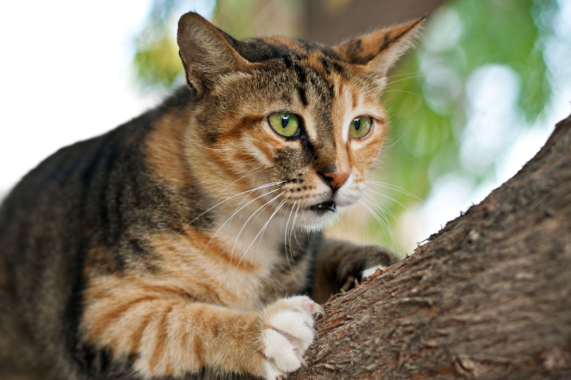 Cats Use Their Claws To Climb Trees But What If Kitties Do