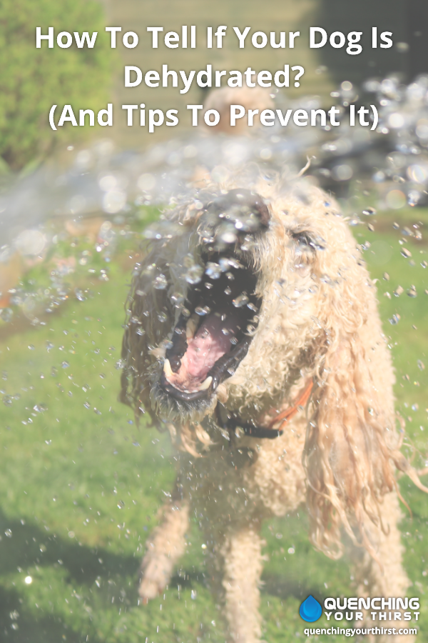 How To Tell If Your Dog Is Dehydrated And Tips To Prevent It Your Dog Dogs Prevention